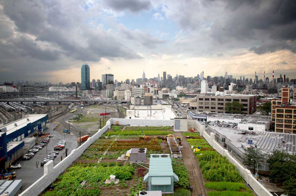 Brooklyn Grange rooftop farm New York City 1